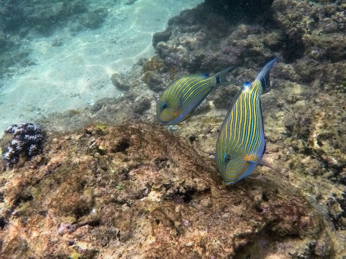 Snorkelling Hikkaduwa Coral Reef